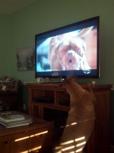 Beau and his Shows